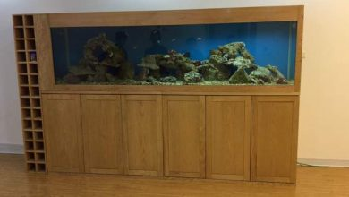 Photo of Mẫu bể cá kết hợp tủ rượu
