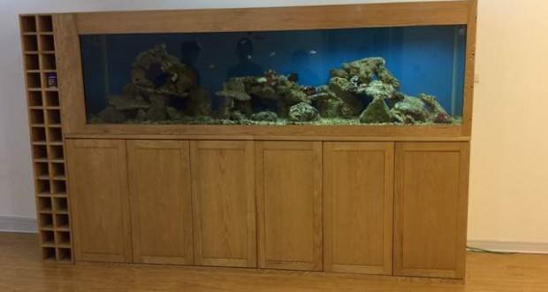 Hình ảnh bể cá kết hợp tủ rượu