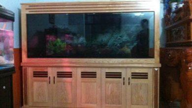 Photo of Bể cá rồng giấu ống gỗ sồi nga