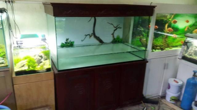 Hình ảnh bể cá rồng giấu ống không nấm