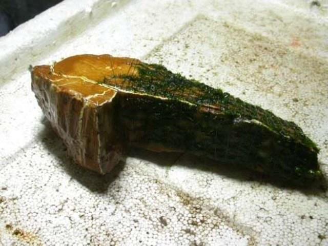 Hình ảnh minh họa kỹ thuật buộc rêu