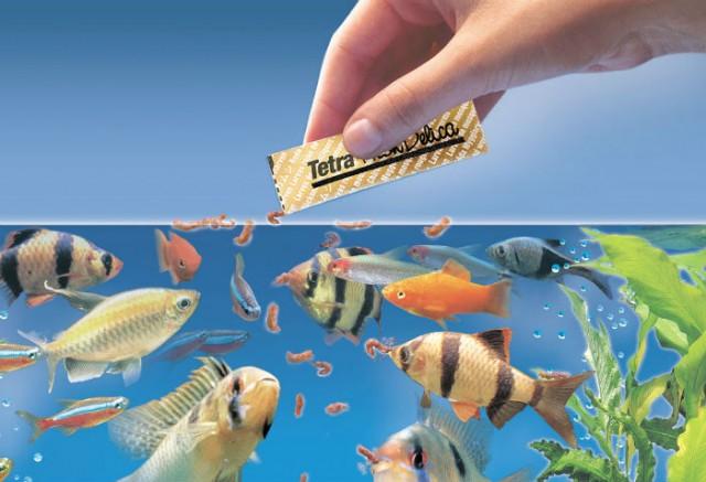 Hình ảnh cho cá cảnh ăn