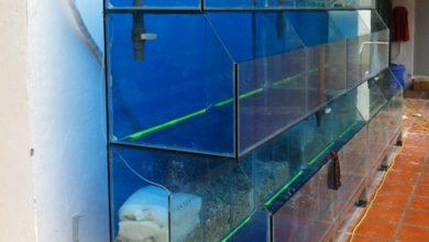 Photo of Dàn bể hải sản tại nhà hàng O2 Garden