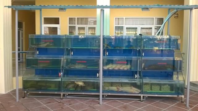 Hình ảnh dàn bể hải sản nhà hàng