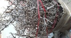 Hình ảnh gỗ lũa buộc rêu