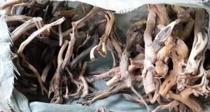 Hình ảnh lũa linh sam gốc