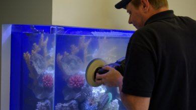 Photo of Cách xử lý kính bể cá bị trầy xước