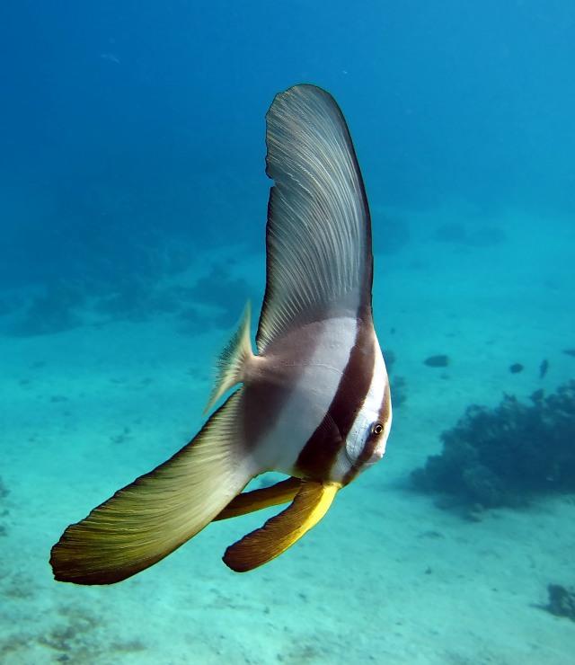 Hình ảnh Cá Hoàng Sa