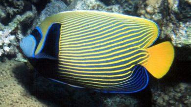 Photo of Danh sách các loại cá cảnh biển – phần I