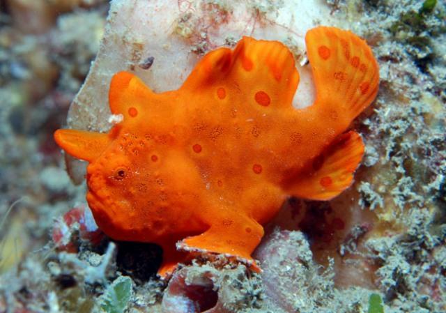 Hình ảnh cá Lã Vọng