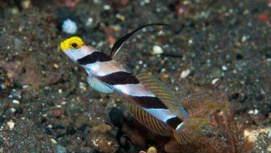 Photo of Danh sách các loại cá cảnh biển – phần II