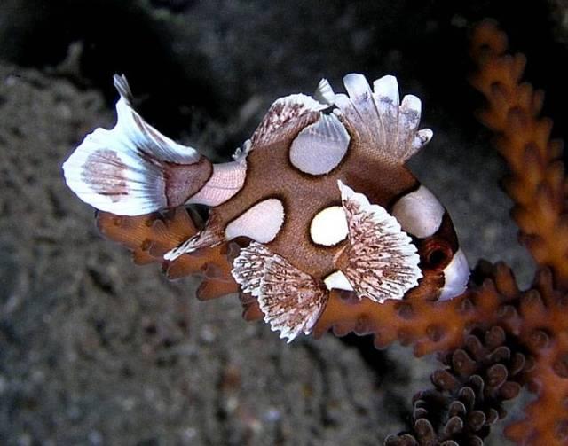 Hình ảnh Cá Kẽm Bông