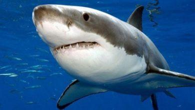 Photo of 10 sự thật về cá mập