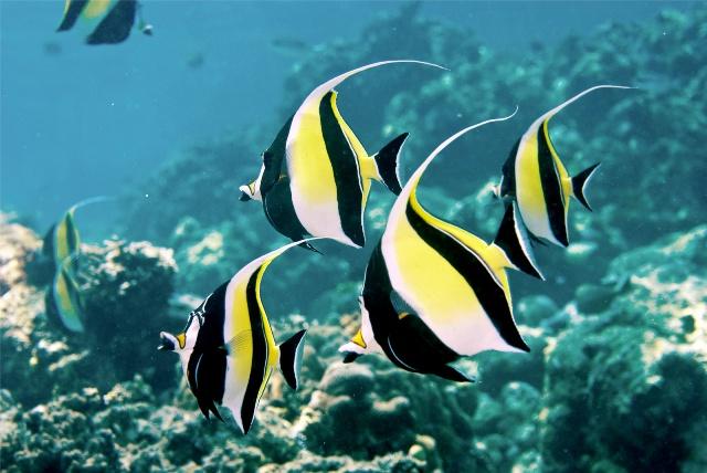 Hình ảnh cá Thù Lù