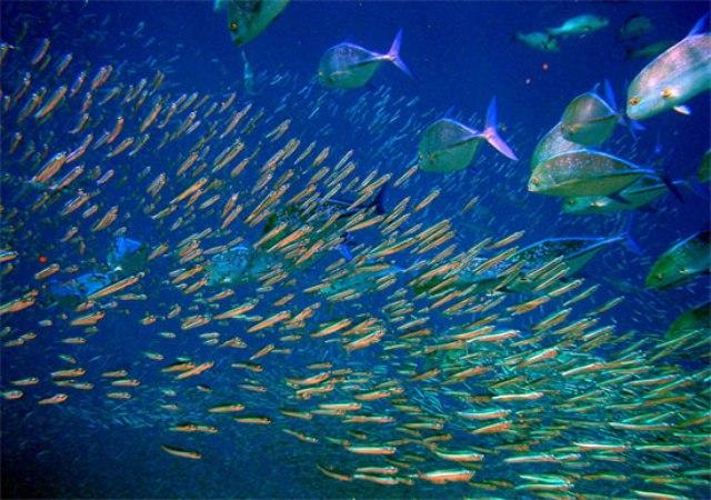 Loài cá có giác quan thứ 6