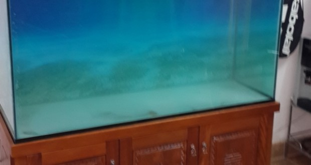 Hình ảnh bể cá rồng 2015