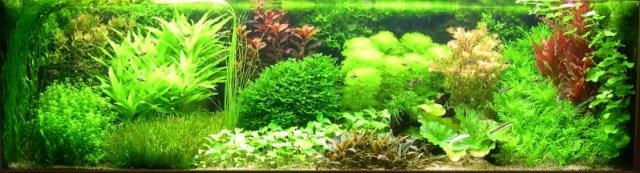 Hình ảnh bể thủy sinh phong cách Hà Lan