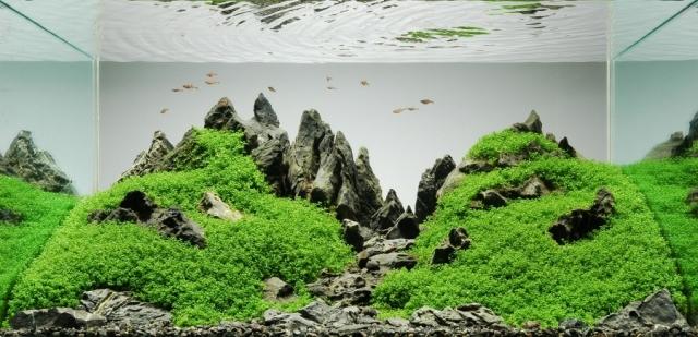 Hình ảnh bể thủy sinh Iwagumi