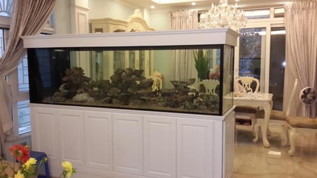 Hình ảnh bể cá cảnh biển