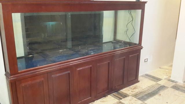 Hình ảnh bể cá rồng chuyên nghiệp