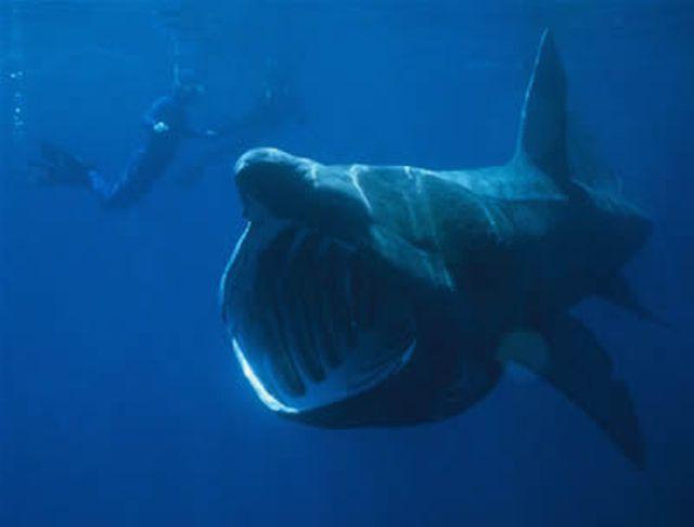 Hình ảnh sinh vật xấu xí nhất đại dương