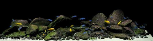 Hình ảnh bố cục bể cá ali