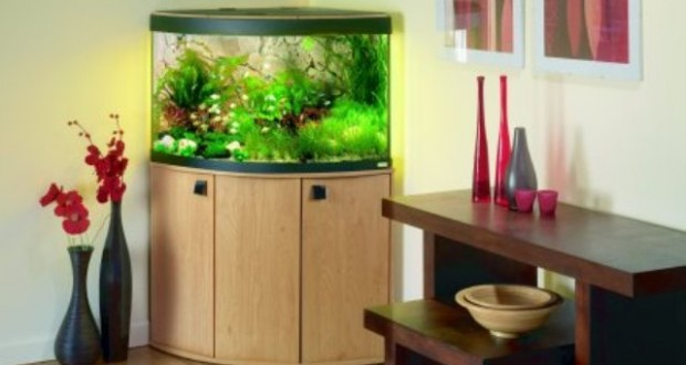 Hình ảnh bể cá góc đẹp