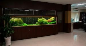 Hình ảnh bể thủy sinh kích thước lớn