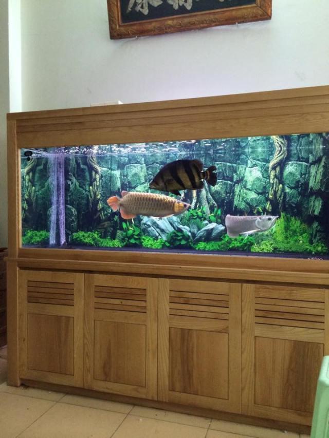 Hình ảnh bể cá rồng đẹp