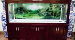 Hình ảnh bể cá rồng gỗ gụ