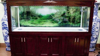 Photo of Mẫu bể cá rồng gỗ gụ đẹp