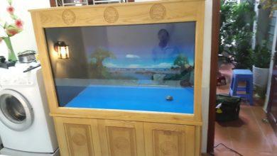 Hình ảnh bể cá rồng mới