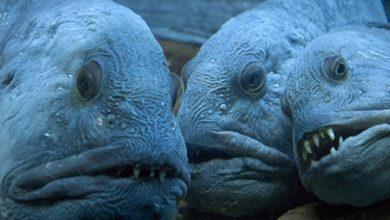 Photo of Top 10 sinh vật biển xấu xí nhất