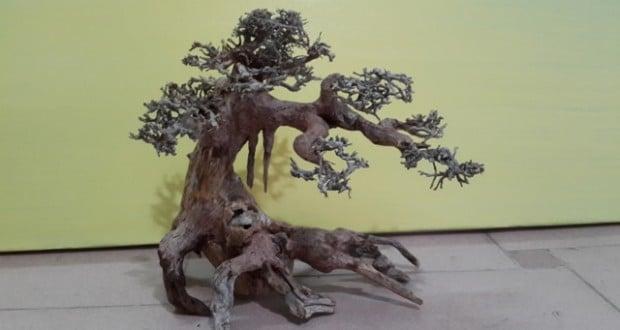 Hình ảnh lũa bonsai thủy sinh