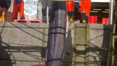 Photo of Lươn khổng lồ dài hơn 6 m