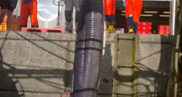 Hình ảnh lươn khổng lồ dài hơn 6m