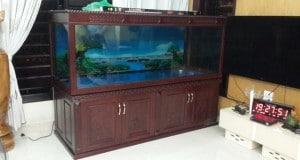 Hình ảnh bể cá rồng đục tứ quý