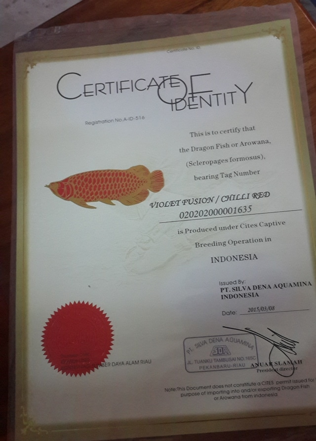 Hình ảnh Certificate của cá rồng