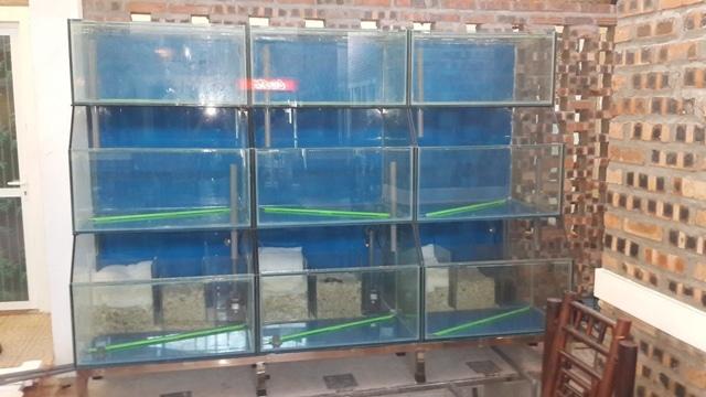 Hình ảnh dàn bể hải sản nhà hàng Hải Phương