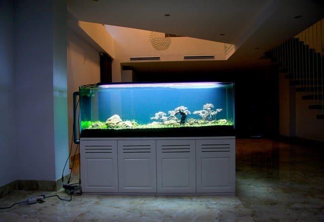 Bể thủy sinh Thái Hòa