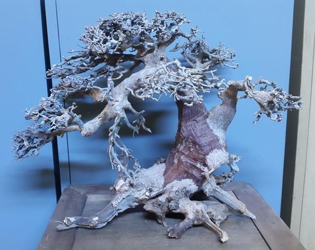 Lũa bonsai cho bể thủy sinh