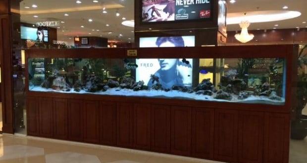 Hình ảnh bể cá biển 5m