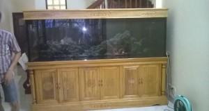 Hình ảnh mẫu bể cá rồng gỗ gụ