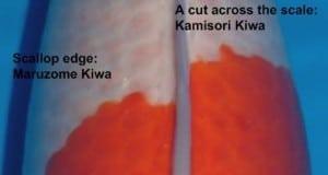 Hình ảnh phân biệt sashi và kiwa