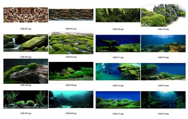 Mẫu tranh 3D cho bể cá cảnh