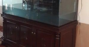 Hình ảnh bể cá rồng gỗ gụ cột tiện