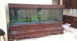 Hình ảnh bể nuôi cá rồng chân quỳ