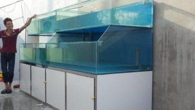 Photo of Dàn bể hải sản thi công lắp đặt tại TP Lạng Sơn
