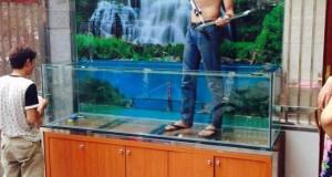Hình ảnh bể cá thác nước