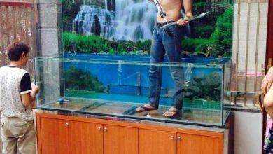 Photo of Bể cá thác nước nuôi Koi – Anh Long Tây Mỗ